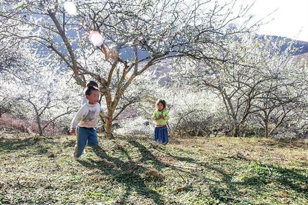 Trẻ em vui đùa dưới gốc hoa ban